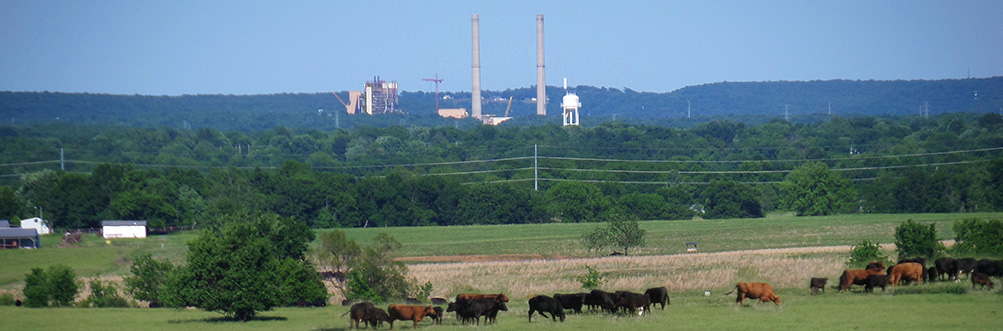 This is a photograph of Chouteau Oklahoma from a distance. A small heard of cows can be seen in the forground, and the town is seen in the background located behin a greenbelt full of trees.